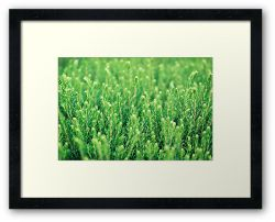 Little Big Forest - Framed Print