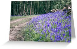 The Bluebell Track - Greeting Card