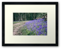 The Bluebell Track - Framed Print