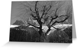 Chamonix Tree - Greeting Card