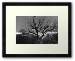 Chamonix Tree - Framed Print
