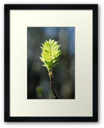 Spring is Here! - Framed Print