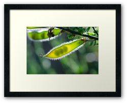 Like Seeds in a Pod - Framed Print