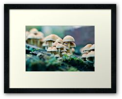 So Much Room - Framed Print