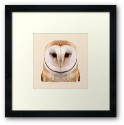 The Owl - Framed Print