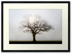 Misty Morning - Framed Print