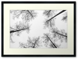 High Amongst the Tree Tops - Framed Print