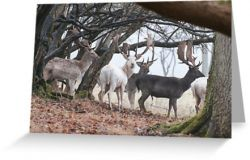 Sussex Bucks - Greeting Card