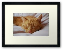 The Little Big Cat - Framed Print