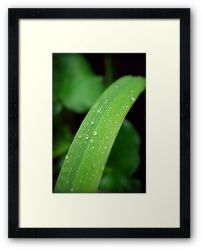 Day 8 - 18th July 2011 - Framed Print