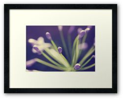 Day 28 - 7th August 2011 - Framed Print
