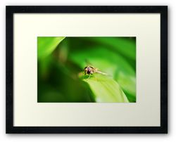 Day 33 - 12th August 2011 - Framed Print